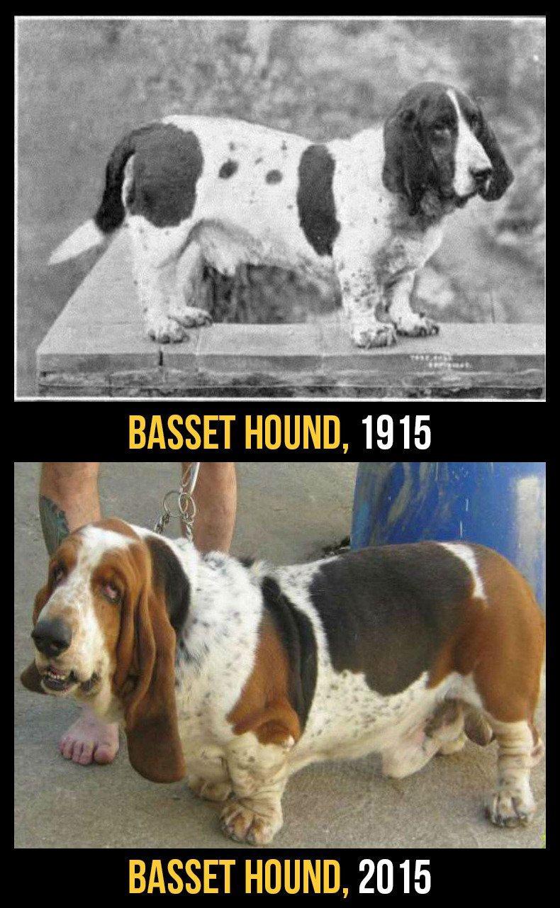 razas perro evolucion 2
