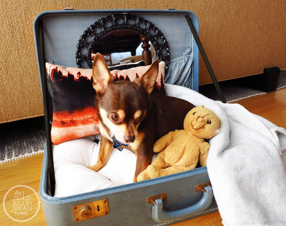 25 maneras de buscar una nueva vida a tus viejas maletas 1