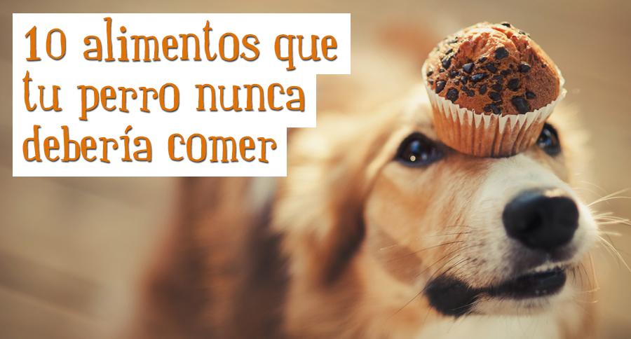 alimentos-perro-no-debe-comer