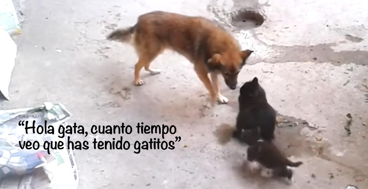 amistad entre gatos y perros y gatitos