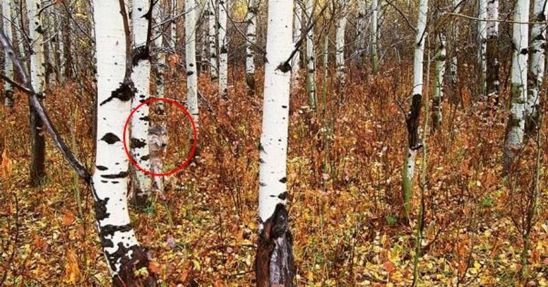 El sorprendente hallazgo de los bosques de Chernobyl
