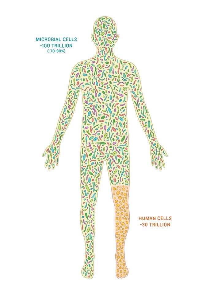 bacterias celulas