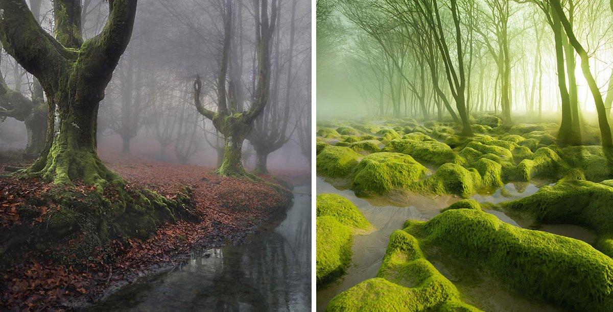 18 Bosques Que Parecen Sacados De Un Cuento De Hadas Y En Los Que No Te Importaría Perderte
