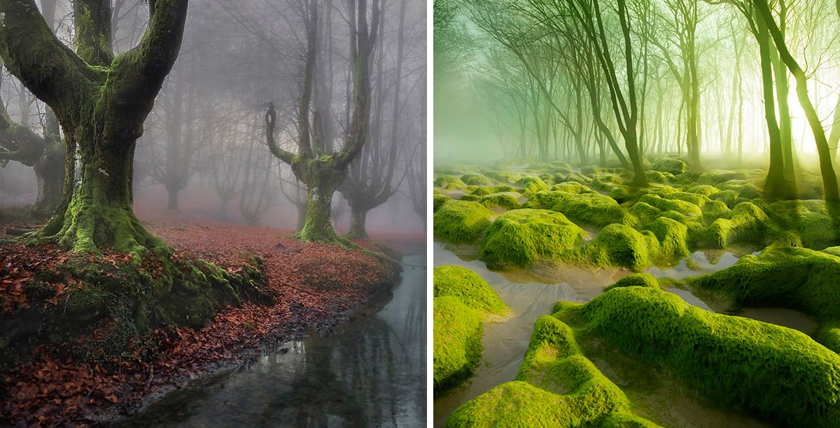 bosques_portada