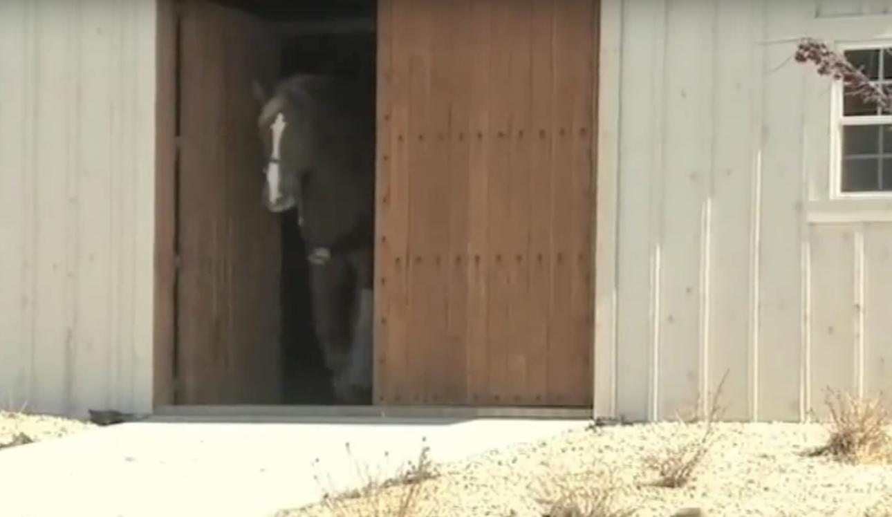 caballo-gigante