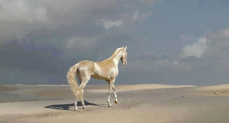 caballo-sol
