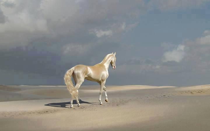 caballos-dorados-12