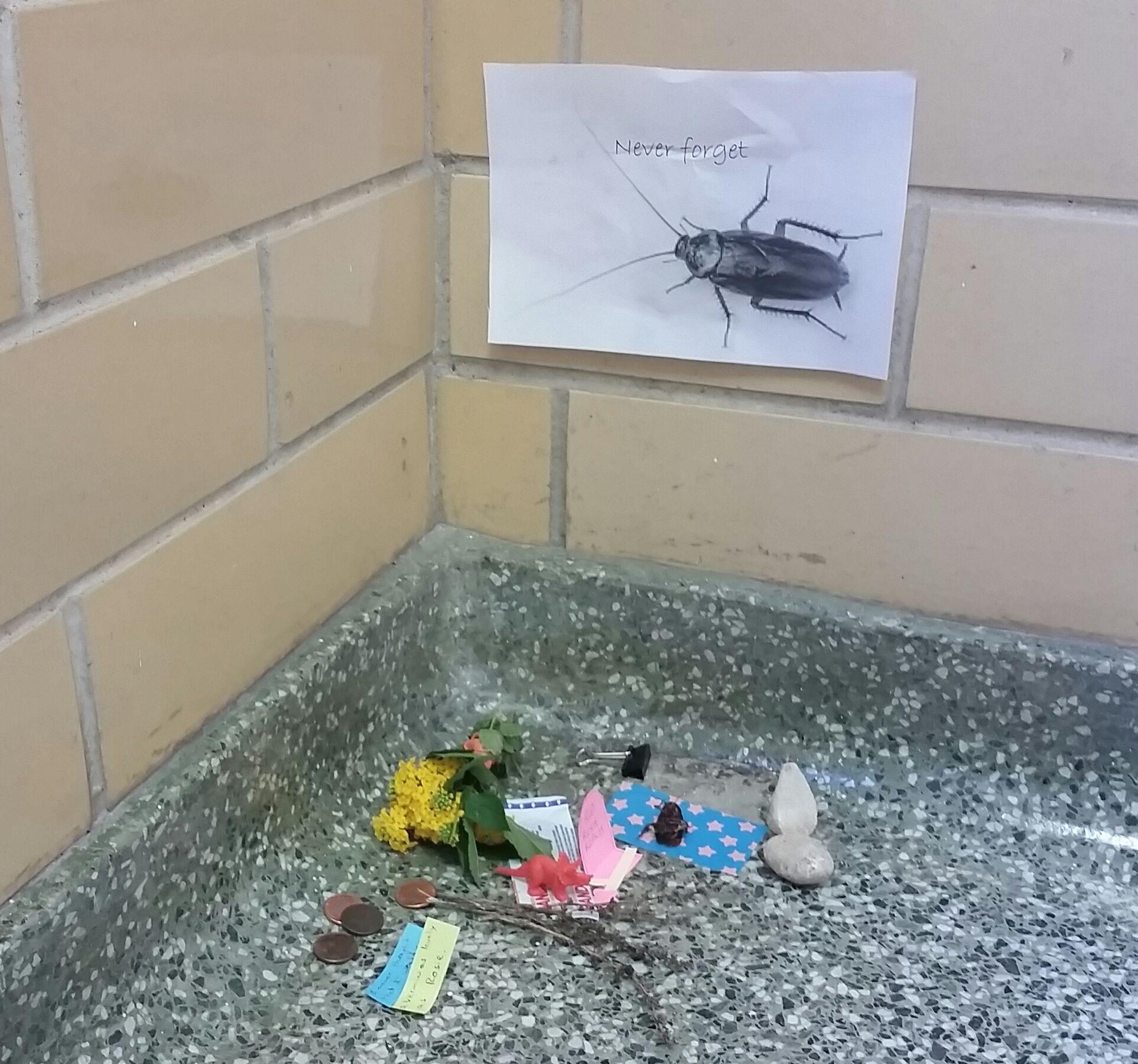 cucarachas 3