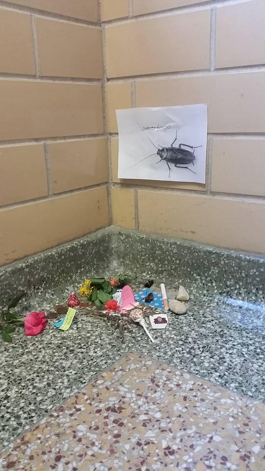 cucarachas 4