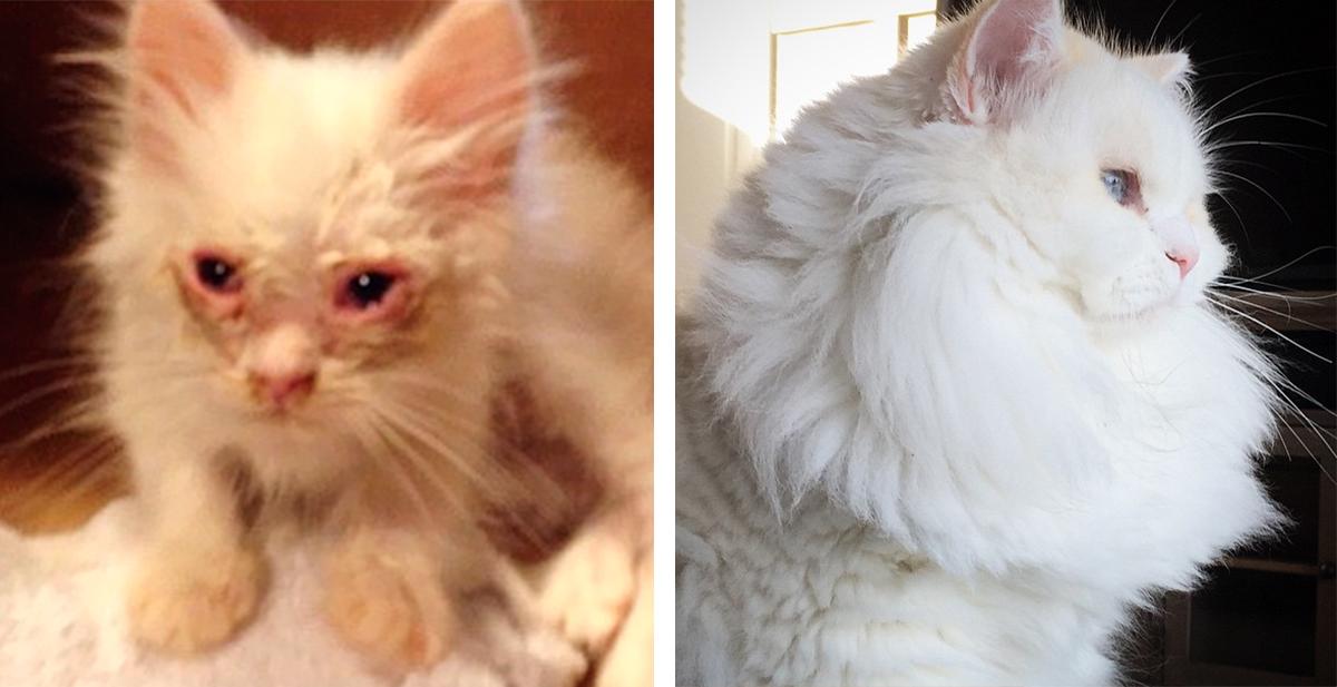 el increible cambio de silas el gato
