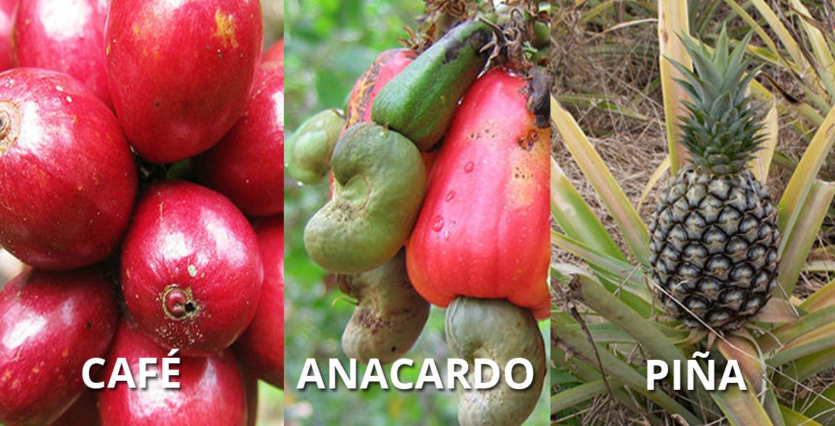 frutas-origen