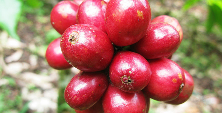 frutas_2