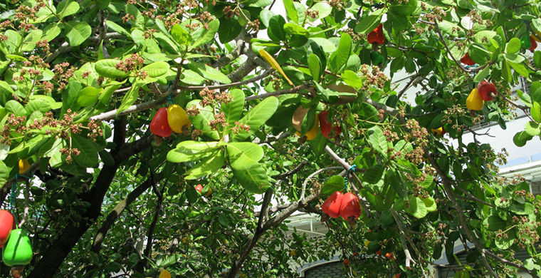 frutas_24
