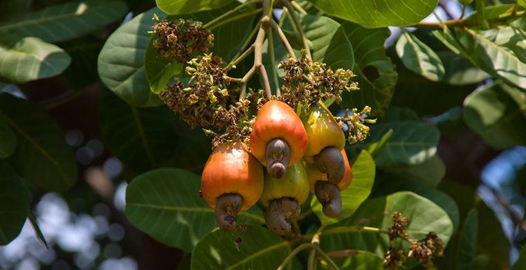 Pasa y conoce estas frutas y verduras que seguro comiste