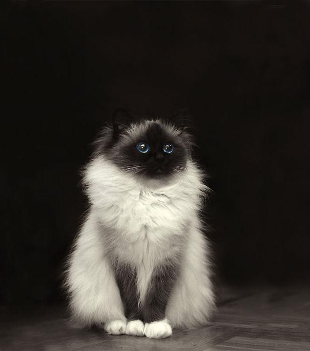 gatitos esponjosos y achuchables 1