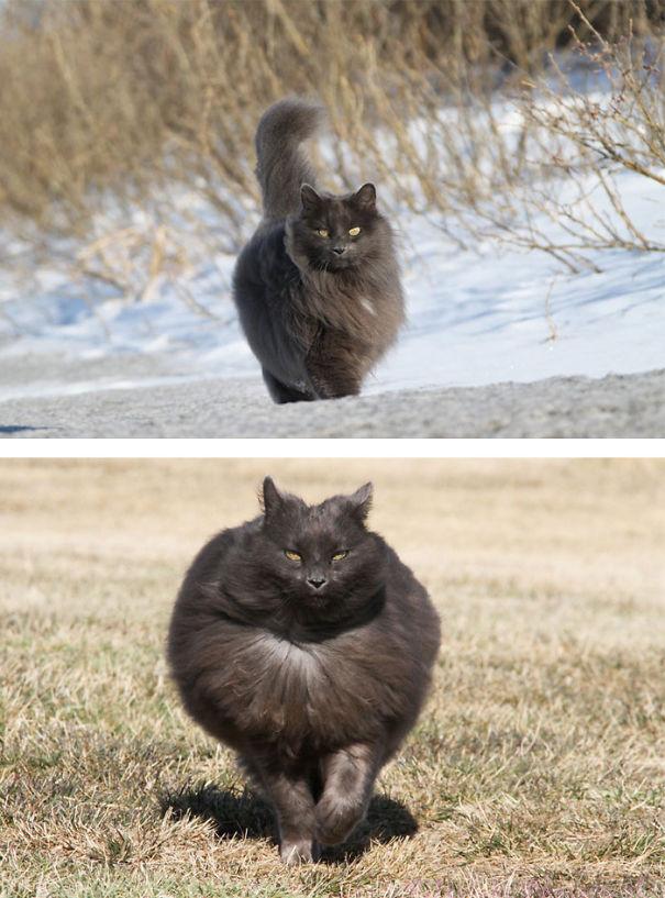 gatitos esponjosos y achuchables 10
