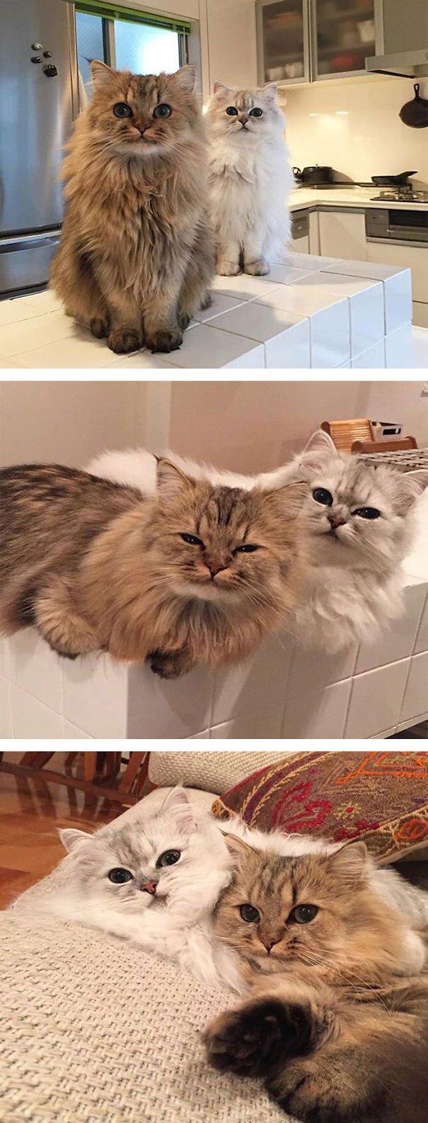gatitos esponjosos y achuchables 12