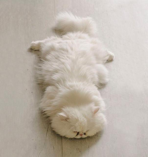 gatitos esponjosos y achuchables 13