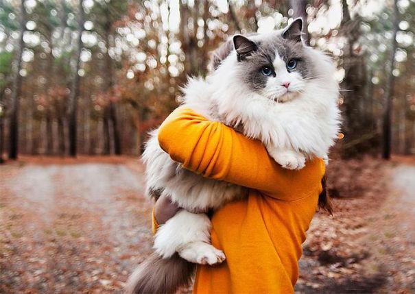 gatitos esponjosos y achuchables 14