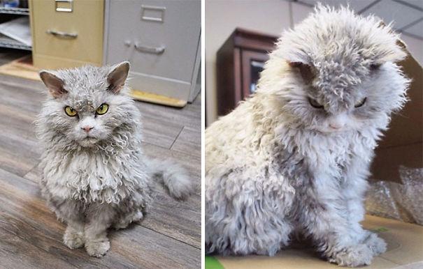 gatitos esponjosos y achuchables 16