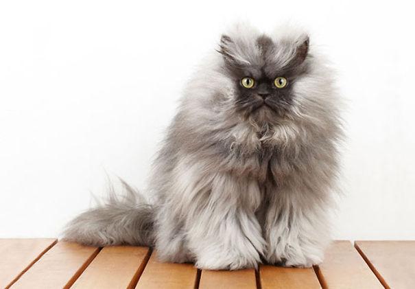 gatitos esponjosos y achuchables 23
