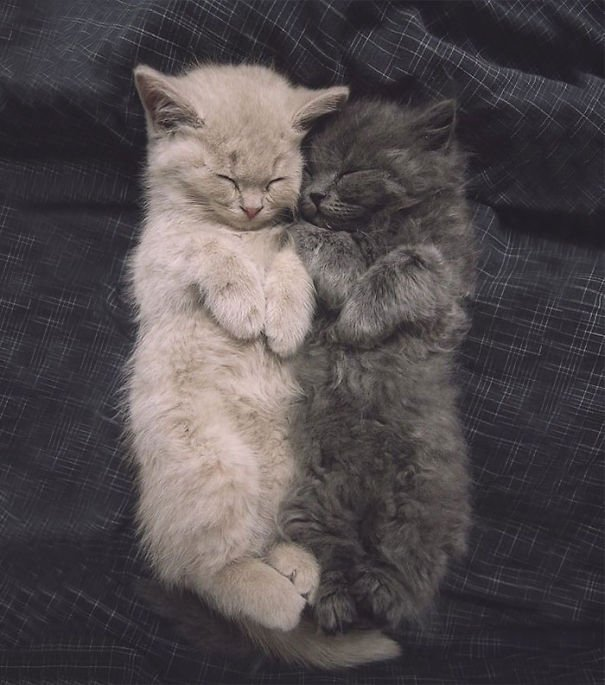 gatitos esponjosos y achuchables 24
