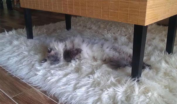 gatitos esponjosos y achuchables 25