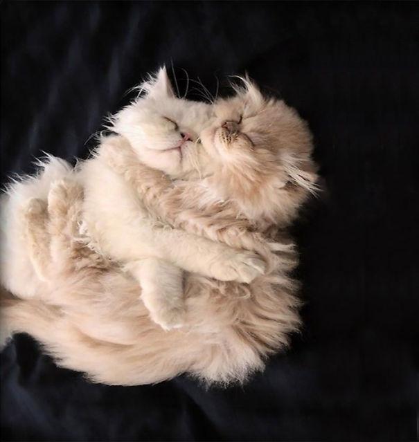 gatitos esponjosos y achuchables 26