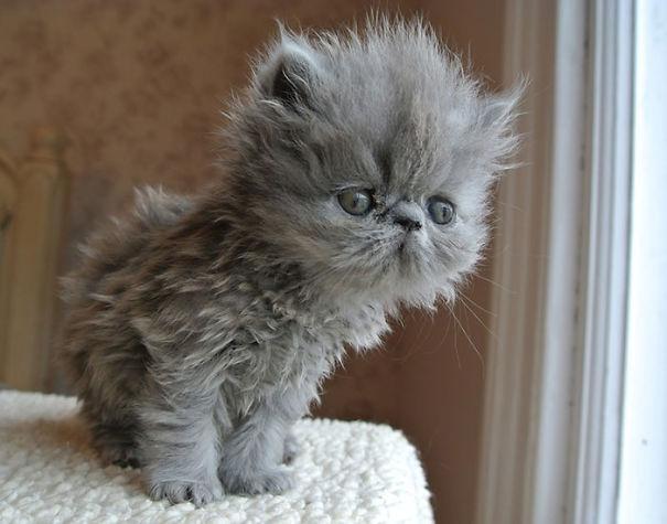 gatitos esponjosos y achuchables 27