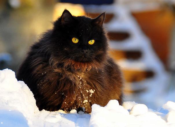 gatitos esponjosos y achuchables 28