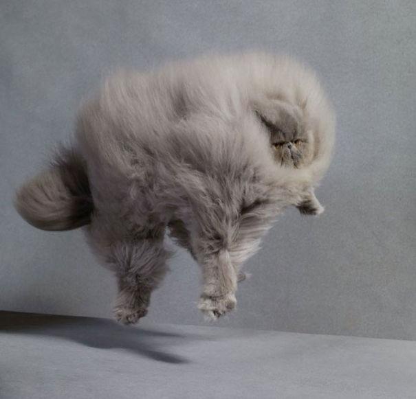 gatitos esponjosos y achuchables 3