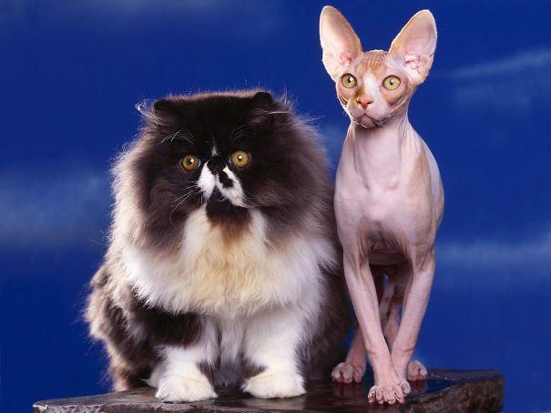 gatitos esponjosos y achuchables 30