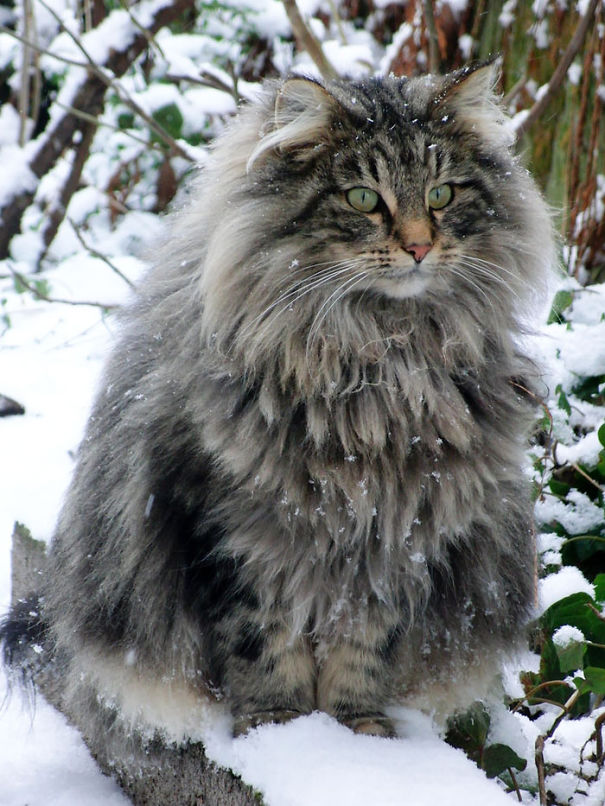 gatitos esponjosos y achuchables 4