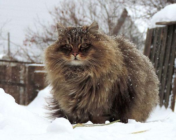 gatitos esponjosos y achuchables 7