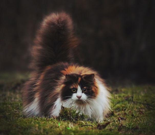 gatitos esponjosos y achuchables 8