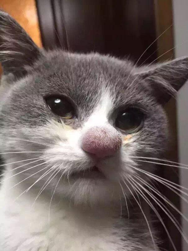 gatos que fueron picados por una avispa 1