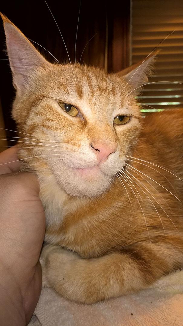 gatos que fueron picados por una avispa 12