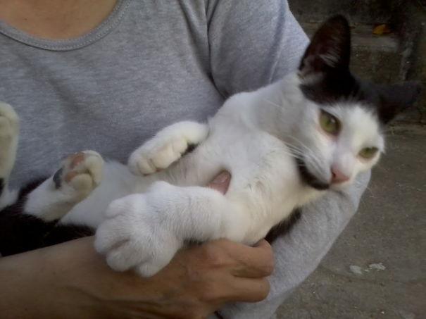 gatos que fueron picados por una avispa 15
