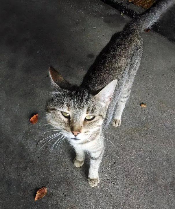 gatos que fueron picados por una avispa 16