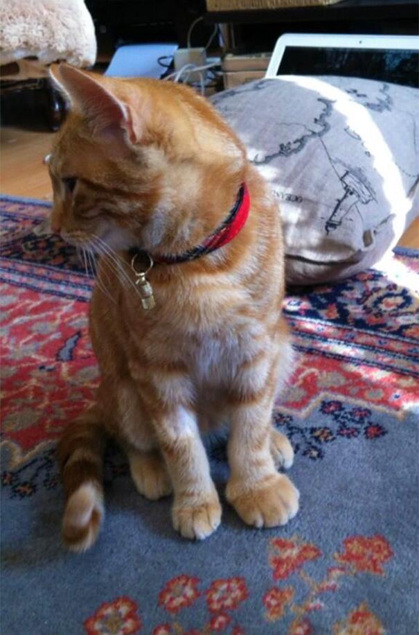 gatos que fueron picados por una avispa 17