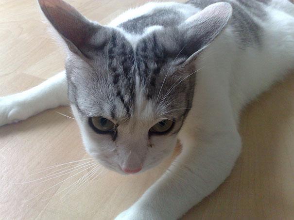 gatos que fueron picados por una avispa 19