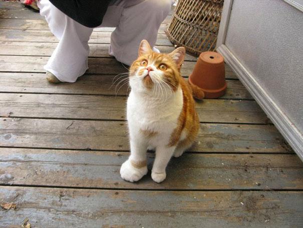 gatos que fueron picados por una avispa 2