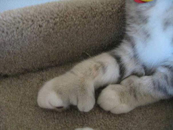 gatos que fueron picados por una avispa 20