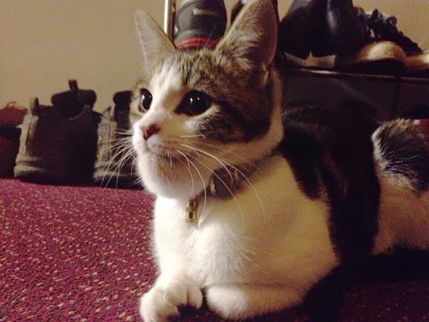gatos que fueron picados por una avispa 3