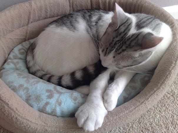 gatos que fueron picados por una avispa 5