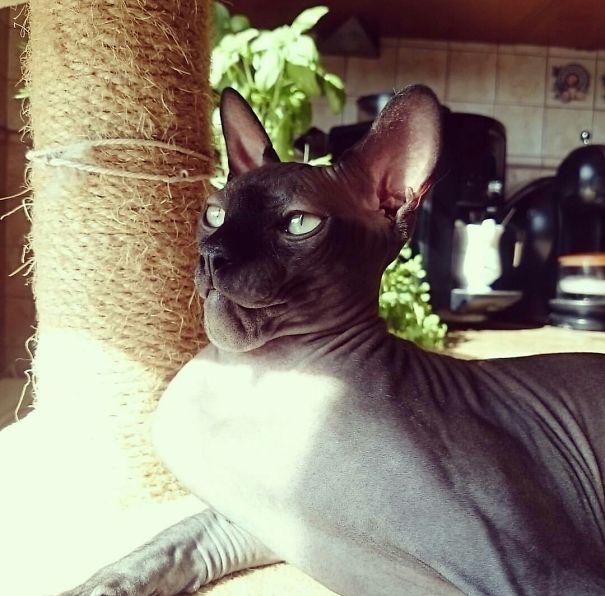 gatos que fueron picados por una avispa 7