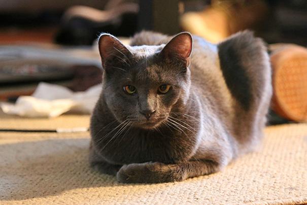 gatos que fueron picados por una avispa 9