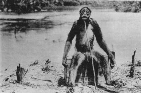 Fotografía del supuesto hombre mono de Francois De Loys, un prospector suizo que decía haber encontrado a este humanoide en la selva colombiana en 1917.