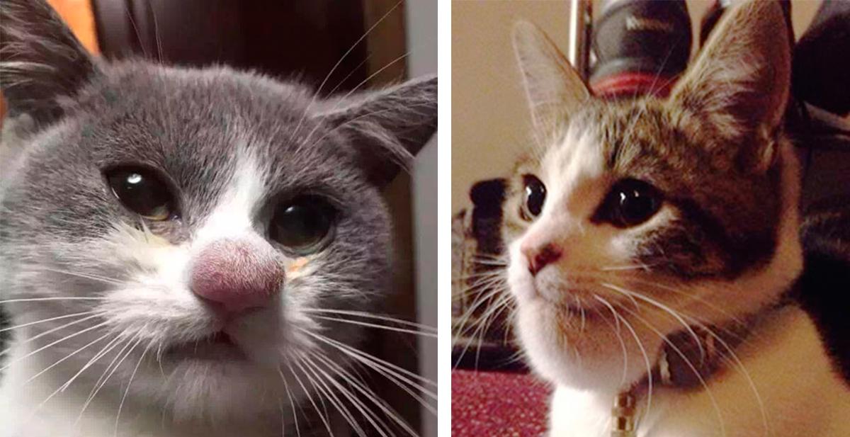 los gatos y las avispas, enemigos hasta el fin