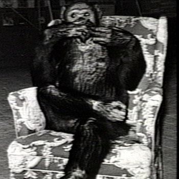 oliver el chimpace humano 10